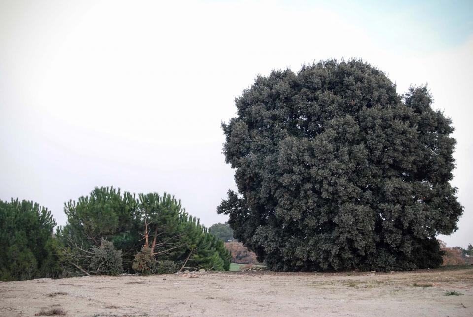 13.12.2015 alzina  Talavera -  Ramon Sunyer