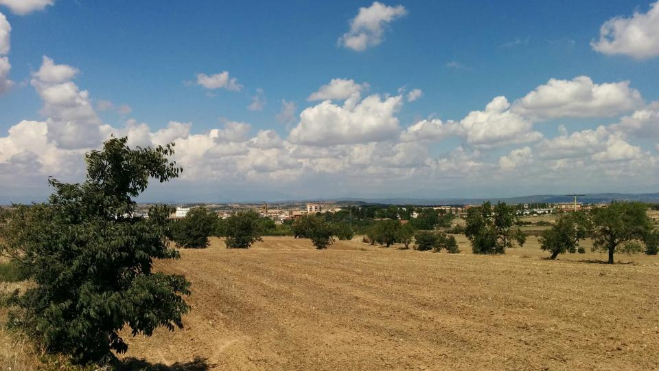23.08.2015 paisatge  Guissona -  Ramon Sunyer