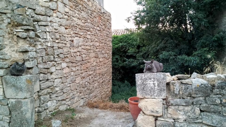 11.07.2014 gats que es pensen lleons  L'Ametlla de Segarra -  Ramon Sunyer