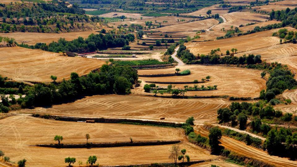 02.08.2015 paisatge  Montornès de Segarra -  Carme Queraltó Duch