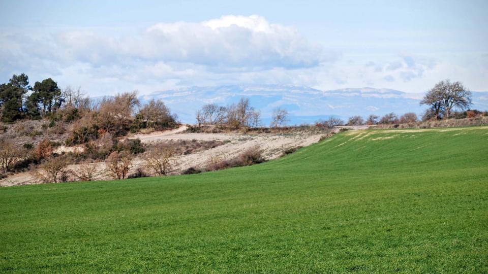 07.02.2016 paisatge  Talavera -  Ramon Sunyer