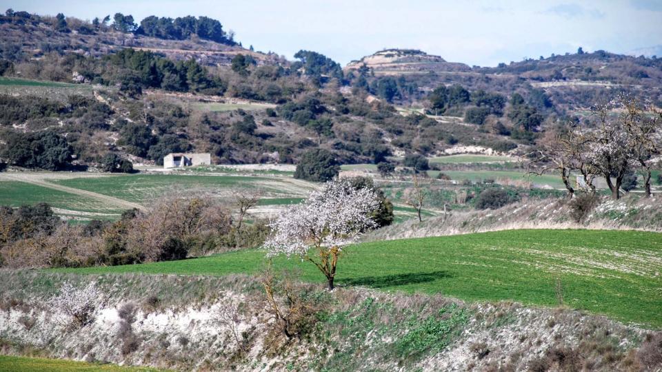 07.02.2016 paisatge  Pavia -  Ramon Sunyer