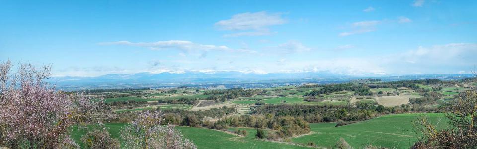 08.02.2016 Mirant el Pirineu  Suro -  Ramon Sunyer