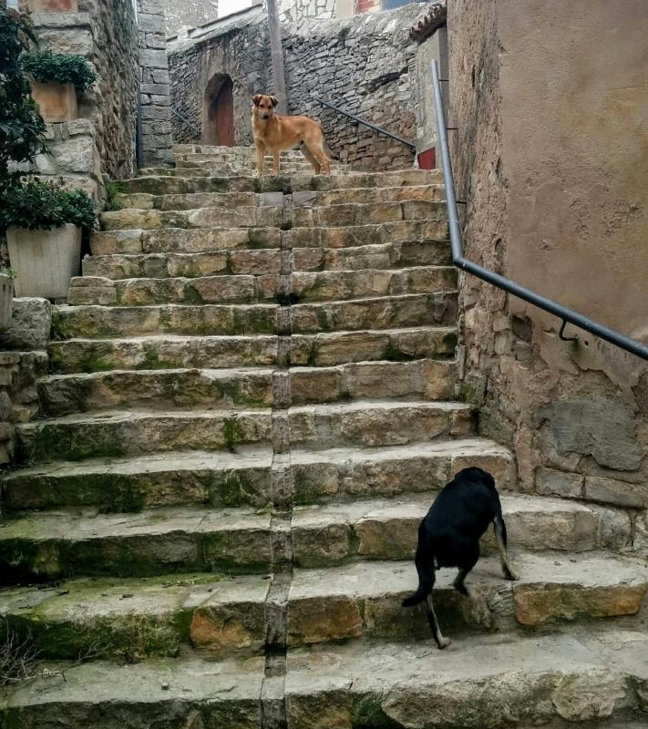 15.02.2015 escales  La Rabassa -  Ramon Sunyer