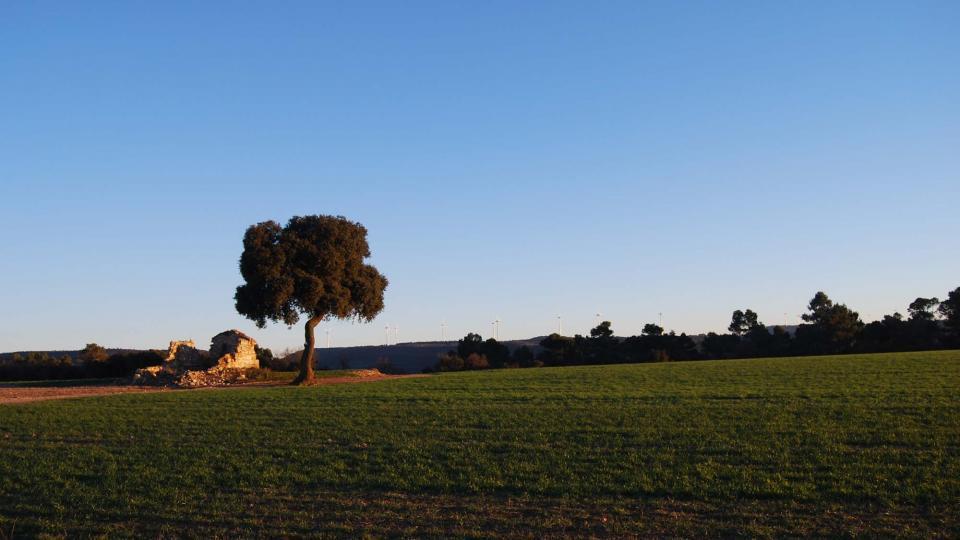 20.02.2016 paisatge  L'Ametlla de Segarra -  Ramon Sunyer