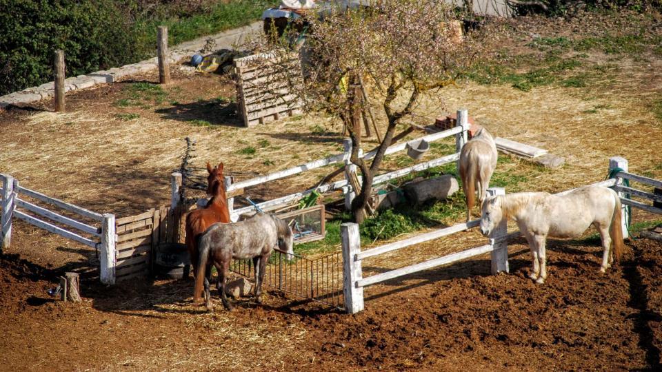21.02.2016 cavalls de cal Perelló  L'Ametlla de Segarra -  Ramon Sunyer