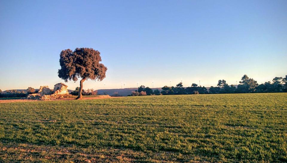 21.02.2016 paisatge  L'Ametlla de Segarra -  Ramon Sunyer