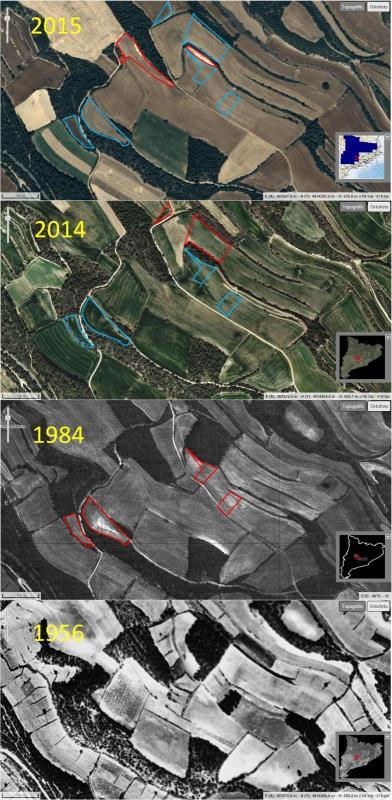 evolució de les rompudes al Pla de les Branques (Sant Domí, Sant Guim de Freixenet) 1956 - 2015 -