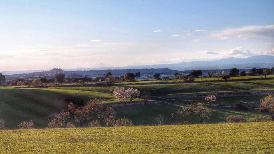 06.03.2016 paisatge  Granyena de Segarra -  Ramon Sunyer