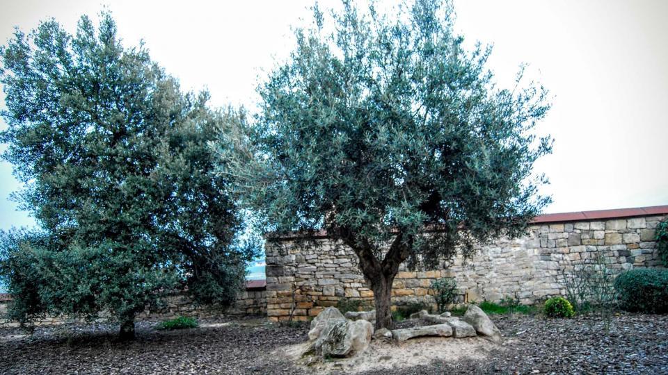 13.03.2016 plaça del castell  Granyena de Segarra -  Ramon Sunyer
