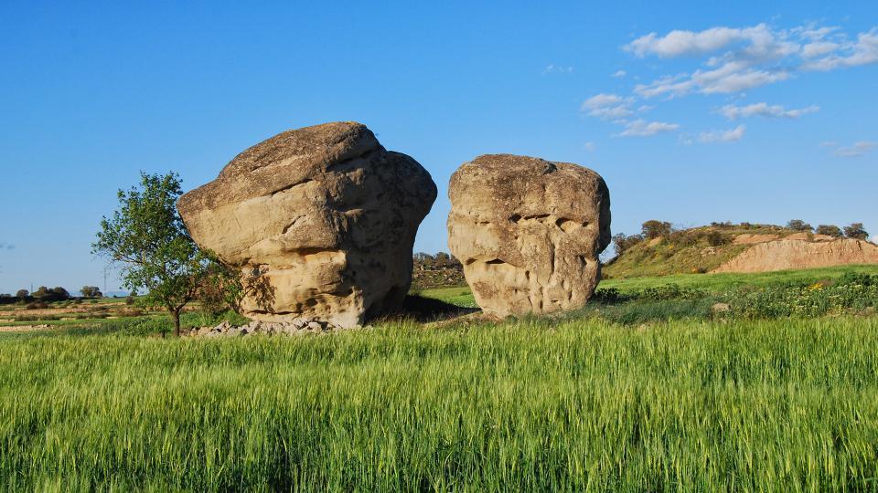 24.04.2016 pallers de pedra  L'Aranyó -  Ramon Sunyer