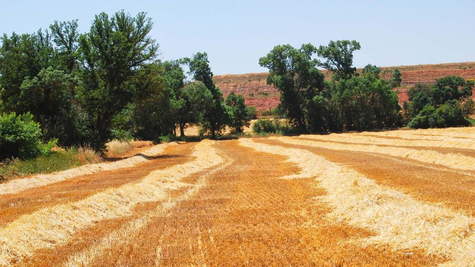 24.06.2016 paisatge  Ratera -  Ramon Sunyer