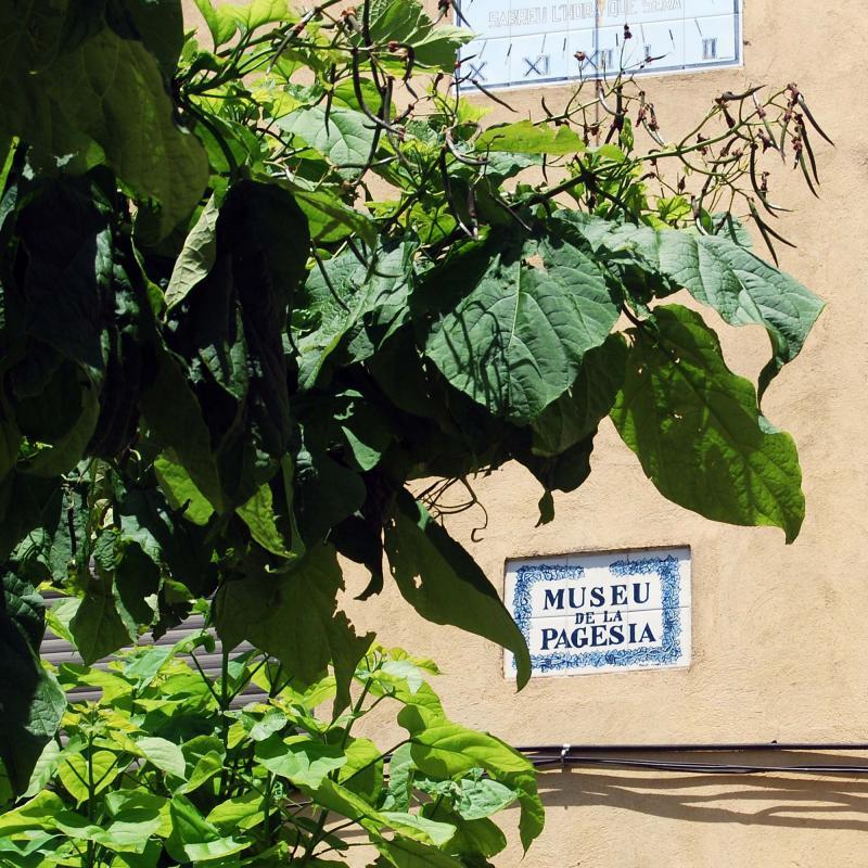 24.06.2016 museu de la pagesia  Sisteró -  Ramon Sunyer