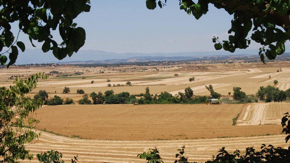 24.06.2016 paisatge  Mont-Roig -  Ramon Sunyer