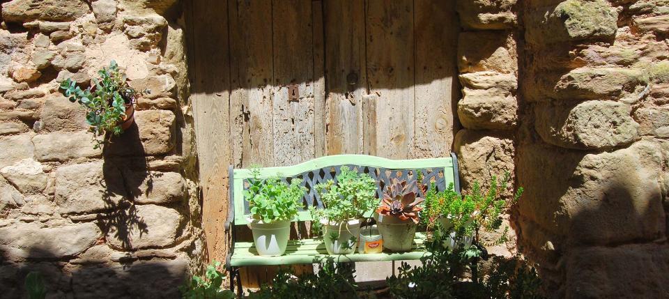 24.06.2016 detall floral  Mont-Roig -  Ramon Sunyer