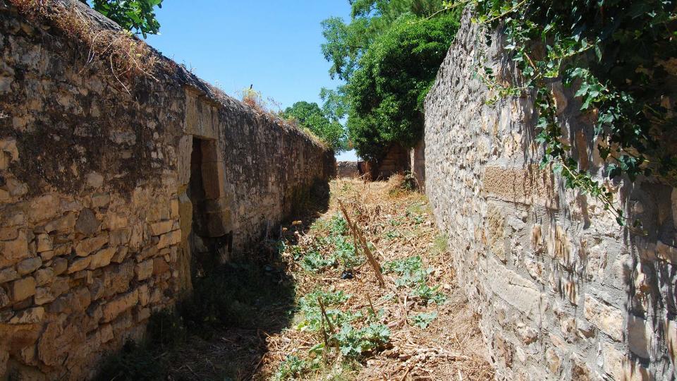 17.07.2016 horts  Tarroja de Segarra -  Ramon Sunyer