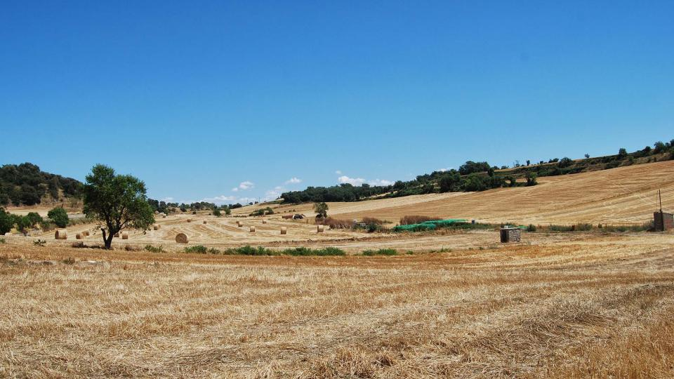 24.07.2016 paisatge  Viver de Segarra -  Ramon Sunyer