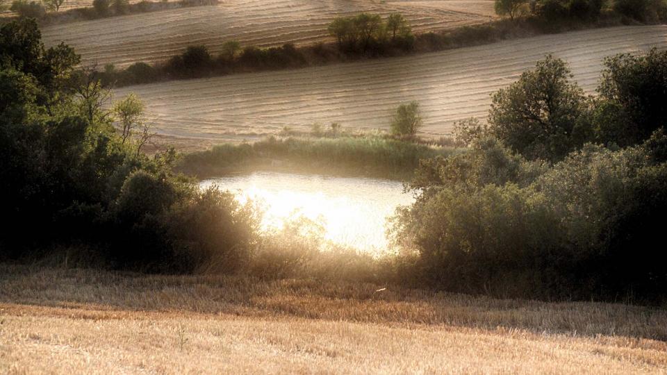 30.08.2016 bassa  Palouet -  Ramon Sunyer
