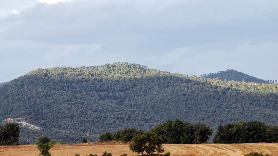 09.08.2016 paisatge  La Llavinera -  Ramon Sunyer