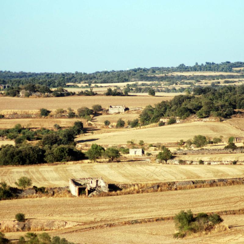 24.08.2016 paisatge  L'Ametlla de Segarra -  Ramon Sunyer