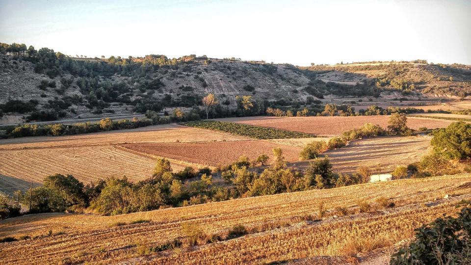 26.08.2014 paisatge  El Mas de Bondia -  Ramon Sunyer