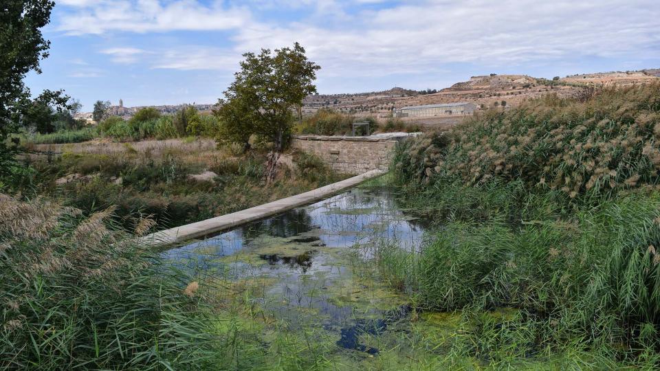 09.10.2016 peixera al riu Ondara  Vergós -  Ramon Sunyer