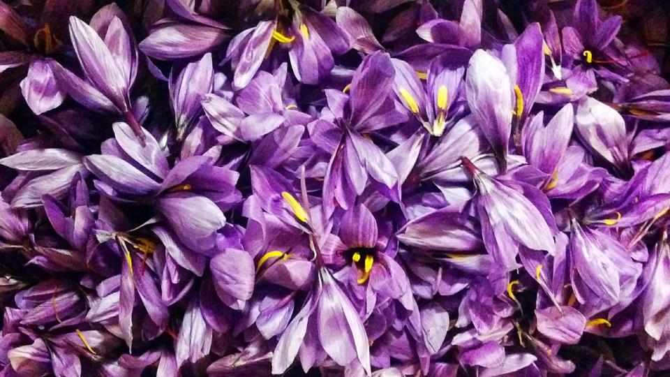 Flors de safrà esbrinades - Torà
