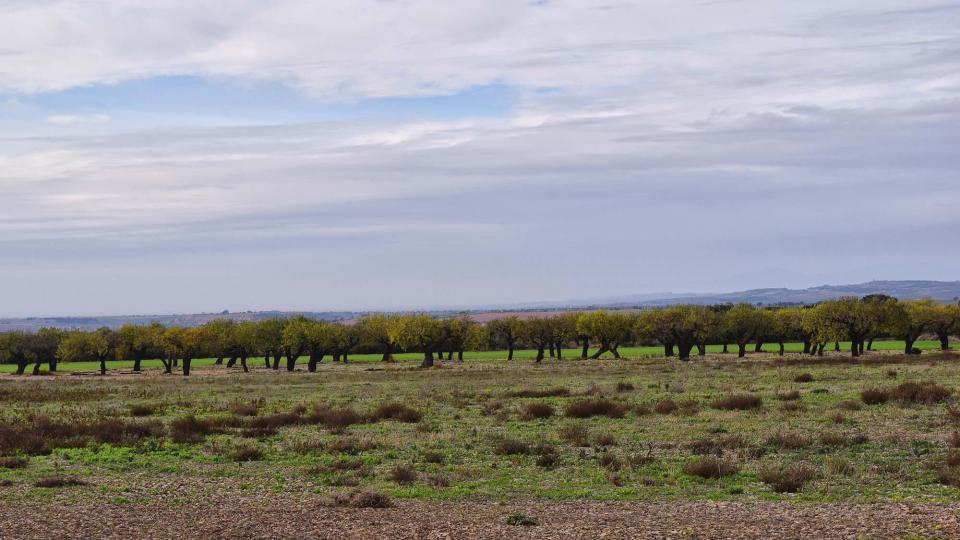 20.11.2016 paisatge  El Canós -  Ramon Sunyer