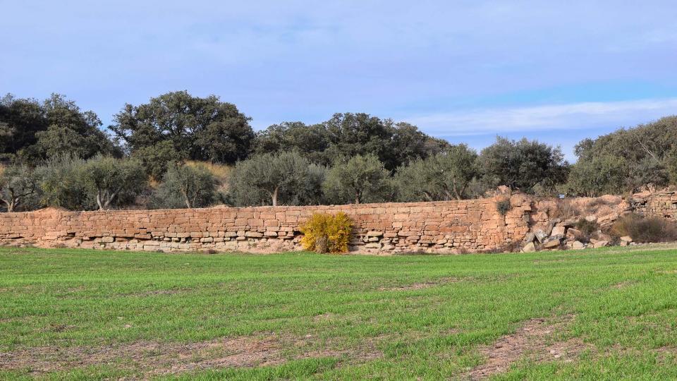 20.11.2016 paisatge  L'Aranyó -  Ramon Sunyer