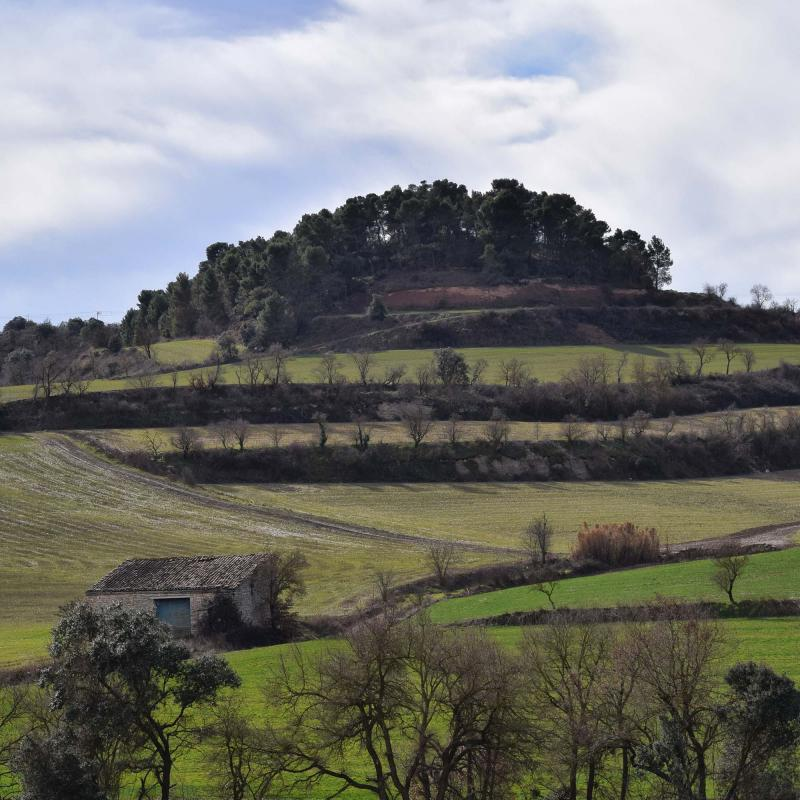 05.02.2017 Vall del Vergós  Rubinat -  Ramon Sunyer