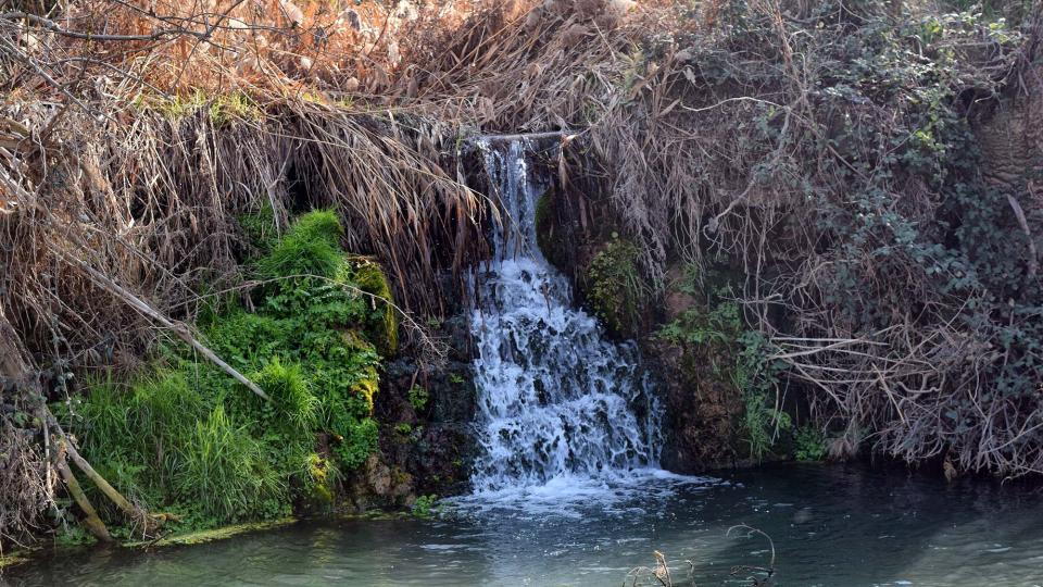 25.02.2018 Peixera de la Prenyanosa al riu Sió  La Prenyanosa -  Ramon Sunyer
