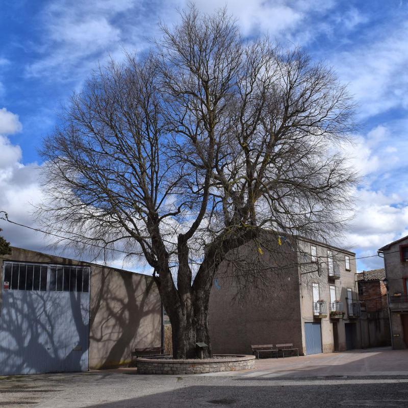 11.03.2018   Castellnou d'Oluges -  Ramon Sunyer