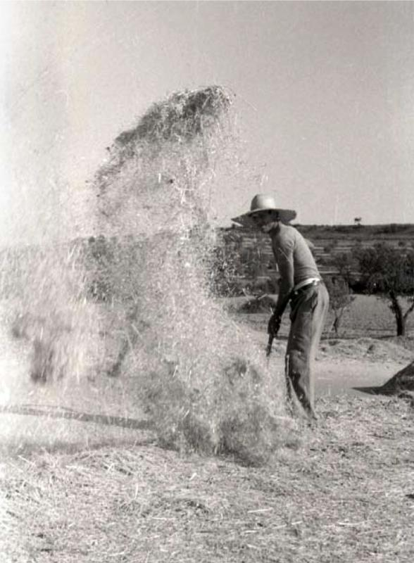 Pagès segarrenc ventant la batuda (entre 1930 i 1935) Claudi  Gómez Grau -