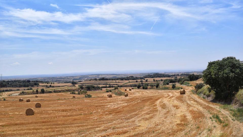 28.07.2018 paisatge  Florejacs -  Ramon Sunyer