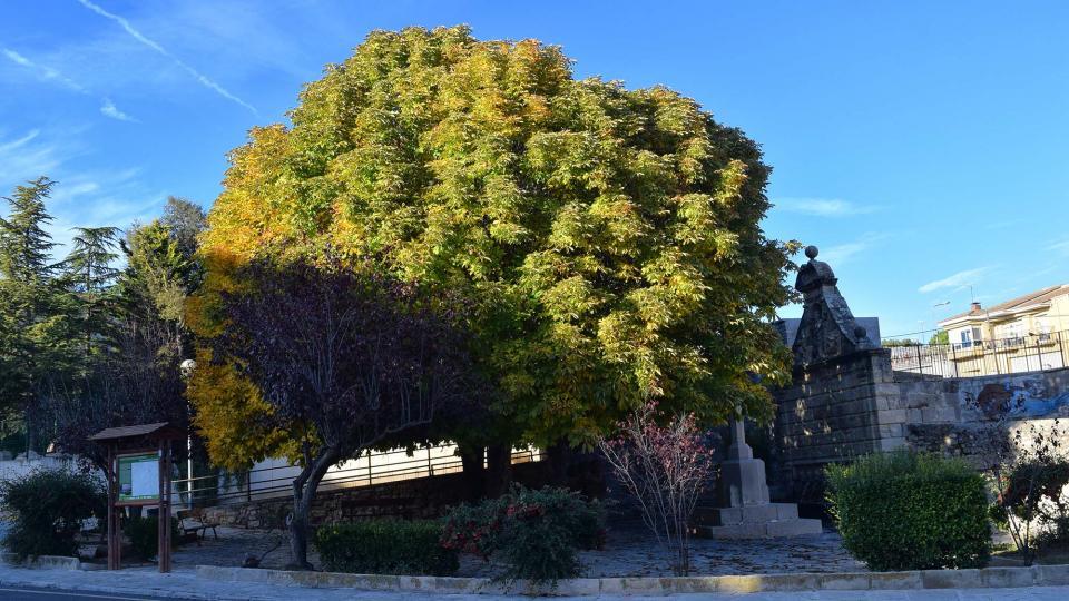 03.11.2018 Font de les Canelles  Santa Coloma de Queralt -  Ramon Sunyer