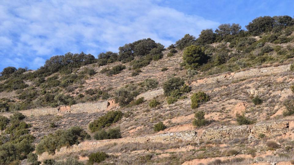 Parets de marge a Montornès de Segarra -