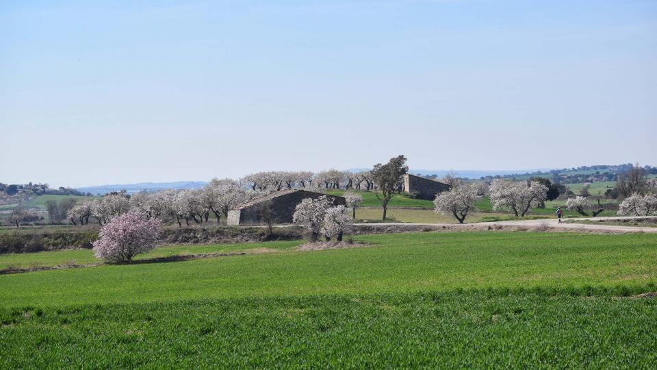 10.03.2019 XX Marxa dels castells  Bellveí -  Ramon Sunyer