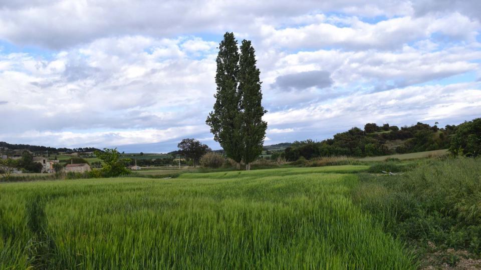 18.05.2019 paisatge  Pallerols -  Ramon Sunyer