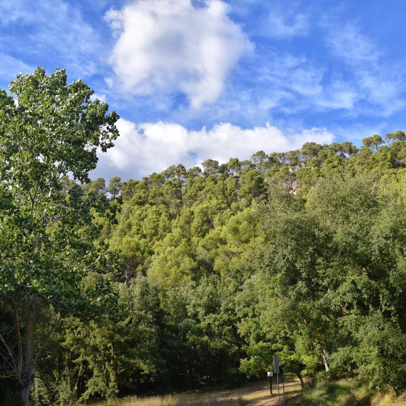 11.09.2019 Paisatge a les Fonts de sant Magí  Rocamora i Sant Magí de la Brufaganya -  Ramon Sunyer