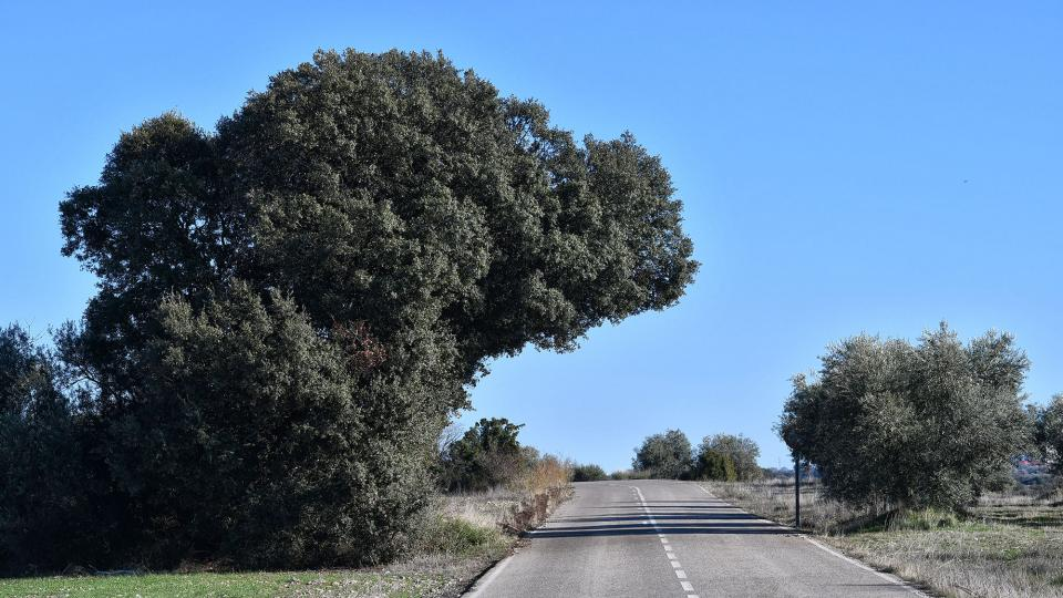 15.12.2019   El Canós -  Ramon Sunyer