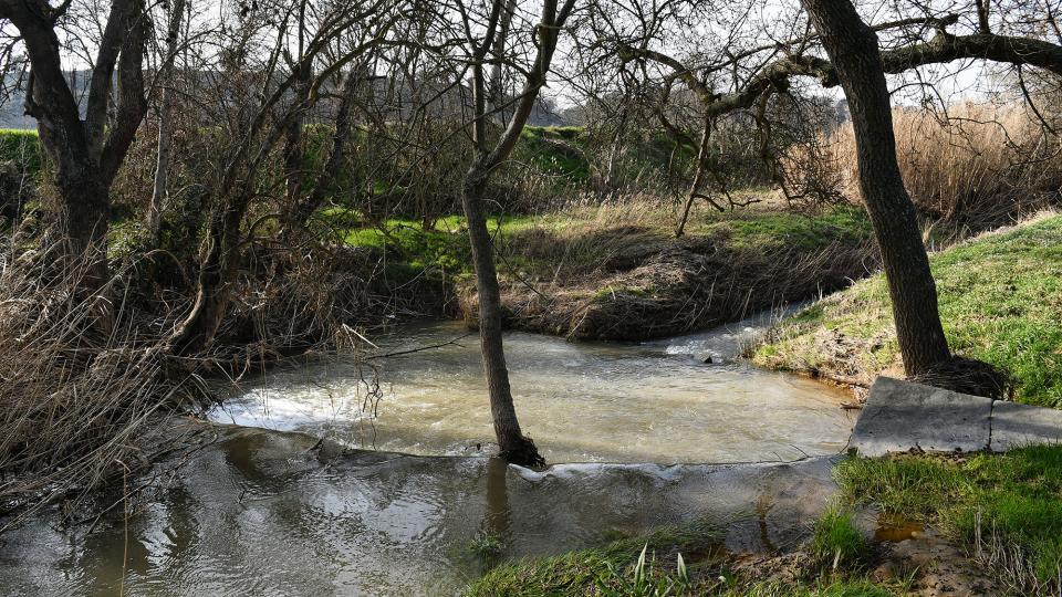 09.02.2020 Peixera de la Prenyanosa al riu Sió  La Prenyanosa -  Ramon Sunyer