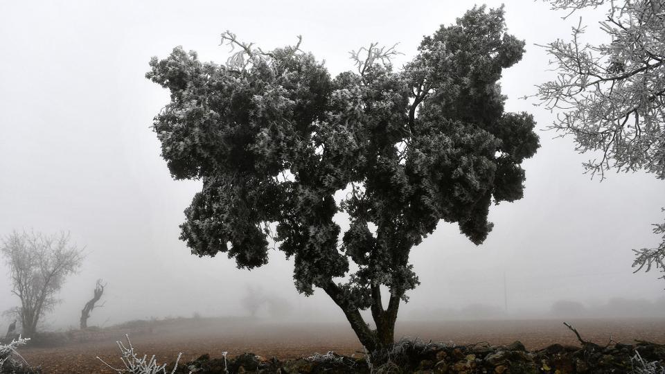04.01.2020 Gebrada  Ferran -  Ramon Sunyer