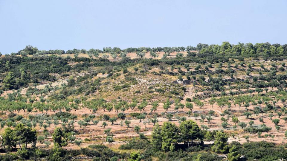 11.08.2018 paisatge  Ciutadilla -  Ramon Sunyer