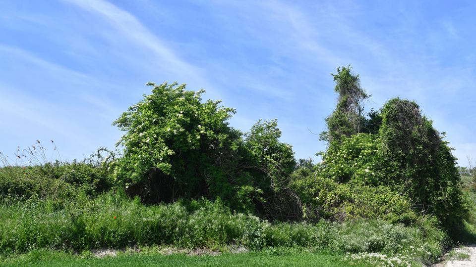 06.05.2020 paisatge  Pallerols -  Ramon Sunyer
