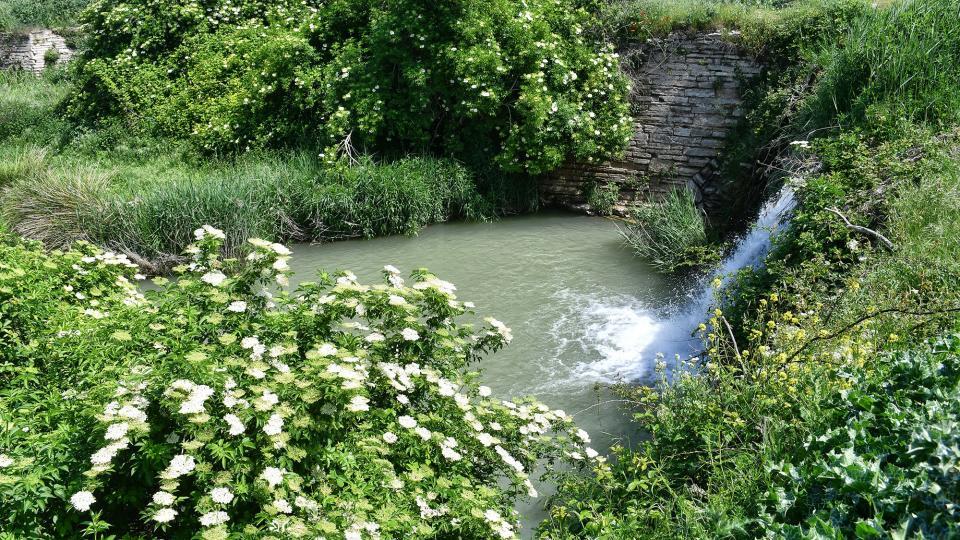 06.05.2020 Peixera al riu Ondara  Pallerols -  Ramon Sunyer