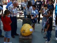 Sedó: El 5è Concurs de Carbasses Gegants va comptar amb una bona participació  Jaume Moya