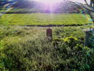 Torà: Paisatge primaveral  Ramon Sunyer