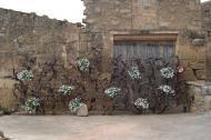 Florejacs:   Pilar
