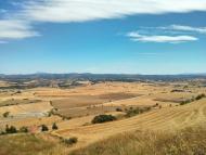 Calaf: Camps de blat esperant la sega  a l'alta segarra  Ramon Sunyer
