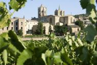 Vallbona de les Monges: vinyes a redós del monestir  Olivera